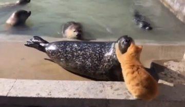 «Молчи!»: кот дал оплеуху наглому тюленю