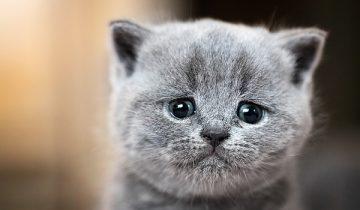 Могут ли кошки плакать? Давайте разбираться