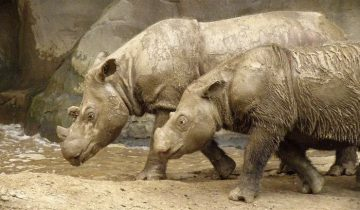 Редкие животные, которых осталось, к сожалению,  меньше 100 особей