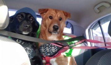 Пару месяцев бездомный пёсик помогал домашнему выживать на улице