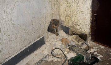 Операция по спасению котика потребовала больших усилий, а котик сбежал, не поблагодарив