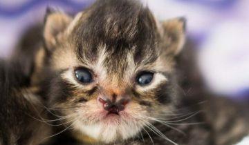 Бабочконосый котик — как сложилась жизнь котенка с аномалией в виде носа-бабочки