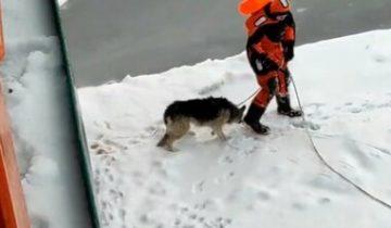В Кронштадте со льдины спасли собаку: операция по спасению прошла успешно