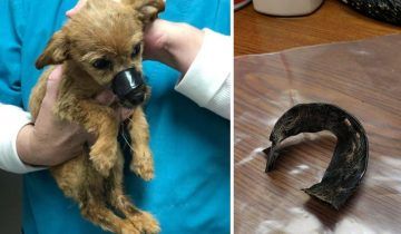 Парень спас жизнь щенку, которого выбросили под мост со скотчем на мордочке