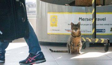 Каждое утро котик приходит на жд станцию Ливерпуля, чтобы пообщаться с людьми