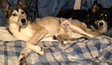 Собака помогла котенку с парализованными лапками