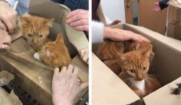 В Англии спасли 11 котов, засунутых в крошечные картонные коробки
