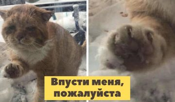 Замерзший болеющий котик постучался в окно с просьбой спасти его