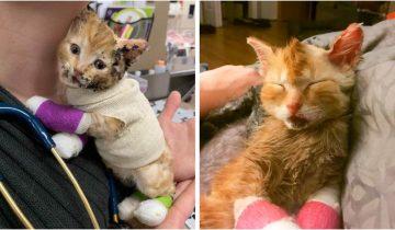 Мужчина забрал к себе и вылечил котенка, который пострадал в пожаре
