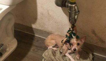 Собаку привязали к раковине и оставили навсегда