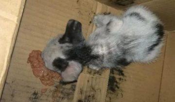 Кожа да кости: худой котёнок-сиротка чуть не погиб на улице