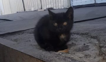 """""""Он покорил меня!"""" – сказала девушка и поехала за бездомным котиком в другой город"""