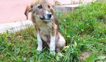 История о том, как у бездомного щенка получилось найти владельцев в другой стране
