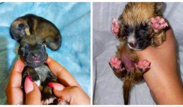 2 месяца назад сестры приютили крошечных щенков, которых нашли в картонной коробке