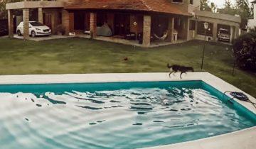 Слепая собака упала в бассейн, но ее друг-пес помог ей выбраться