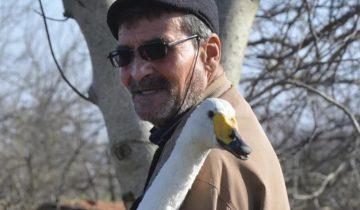 Лебедь 37 лет не покидает мужчину, который его спас