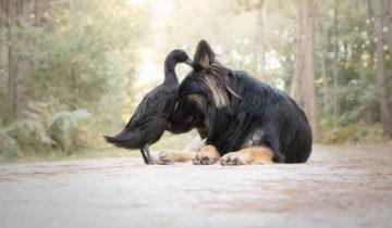 Как живет собака, которая дружит с уткой и голубями