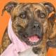 Владелец год искал пропавшую собаку — а под Новый год увидел ее в интернете