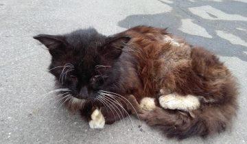 Про котика с улицы, кошку из леса и доброе сердце человека