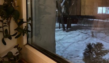 Бездомная овчарка пугала людей, стучась в окна. Она просто искала место, где можно погреться