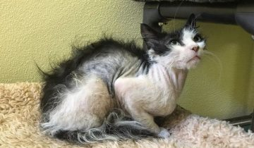 Котик был таким больным и страшным, что люди не понимали какой он породы