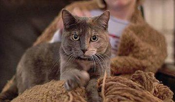 10 способов, с помощью которых котики выражает свою любовь к нам