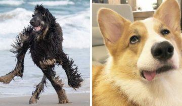 10 фото милых собак, у которых сбились какие-то настройки, но от этого только веселее