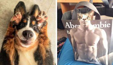 10 фото кошек и собак, которые своим видом поднимут настроение любому из нас
