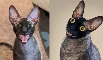 Пиксель — кот, которого называют «ожившим ночным кошмаром»