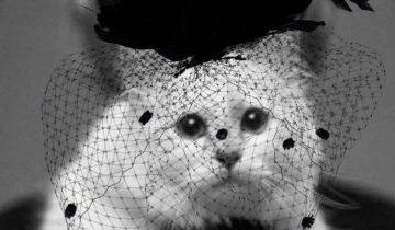 Как живет кошка дизайнера Карла Лагерфельда, которой он оставил 200 млн долларов
