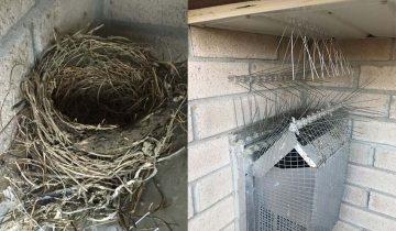 Птицы vs владелец дома: 4 года проигрышей и каждый раз все смешнее