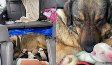 Пара из Техаса 12 часов провела в автомобиле, чтобы собака родила в тепле