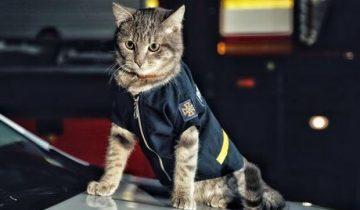 Среди спасателей Киева служит кот со званием майора