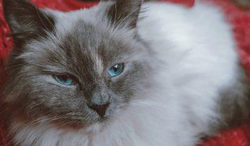 Худая и больная беременная кошка плакала в подвале, моля о помощи…