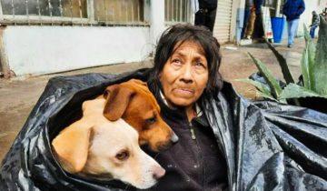 Бездомная женщина отказалась уходить с улицы, ведь ей бы пришлось оставить своих собак