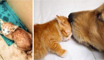 Собака спасла крошечного котенка и теперь они лучшие друзья