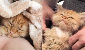Этого котенка забрали из приюта и теперь он не перестает улыбаться