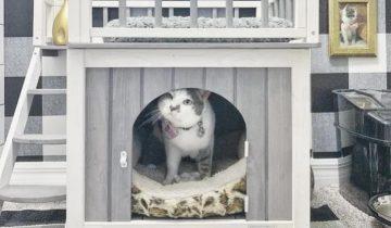 Владельцы построили кошке роскошный дом в доме