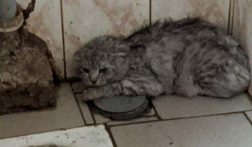 Породистый кот сидел в общественном туалете, вжавшись в стену и шипя на всех