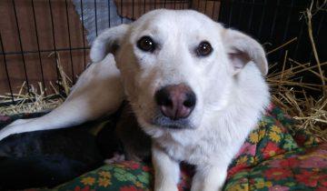 Песик заглядывал в машины, ища помощи для собаки и ее щенков, оставленных в поле