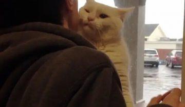 Кот запрыгнул на плечо к человеку, приехавшему в приют, и поехал вместе с ним домой
