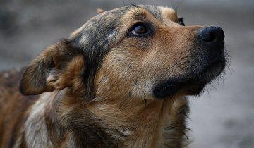 Грузчик покормил бездомного пса своим обедом, а в этот же вечер собака спасла его