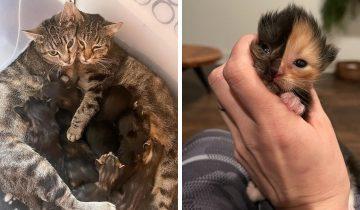Пара спасла от гибели котёнка, брошенного на улице. Его редкий окрас покоряет сердца!