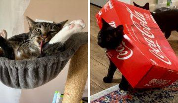10 котов, чья нелепость не позволяет их владельцам выпускать камеру из рук