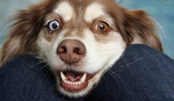 Путешествие с собакой в машине. Как сделать его комфортным?