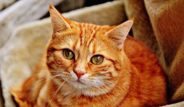 Жутко страшно: почему многие кошки боятся пылесоса