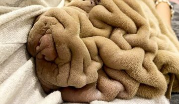 Нет, это не мягкое одеяло. Это миленький симпатичный песик