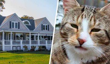 Хозяйка 5 лет думала, что кот исчез навсегда. Узнав о том, где он был все это время, ей стало стыдно