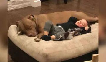 Добро всегда возвращается: спасённая собака лечит мальчика