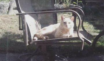Миранда купила дом и нашла в нем записку — это была просьба помочь уличному коту